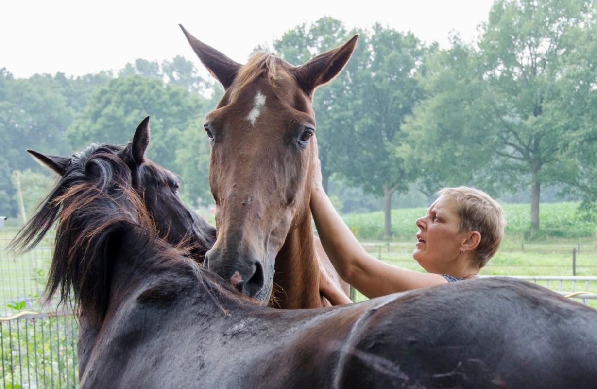 Seybelt Paardencoaching